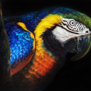 BLUE-YELLOW-MACAW-PARROT