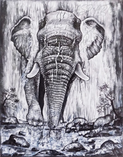 ELEPHANT-IN-THE-WATERFALL